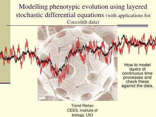 How to model layers of continuous time processes and check these against the data.