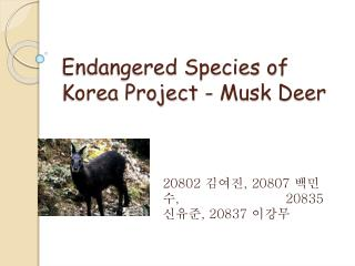 Endangered Species of Korea Project - Musk Deer