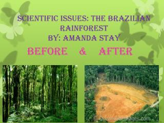 Scientific issues: The Brazilian Rainforest  By: Amanda Stay