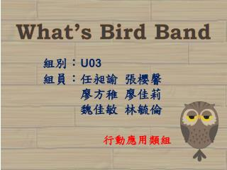 What's Bird Band