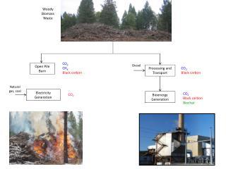 Woody Biomass Waste