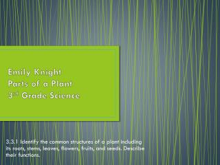 Emily Knight Parts of a Plant 3 rd  Grade Science