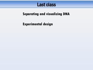 Separating and visualizing DNA
