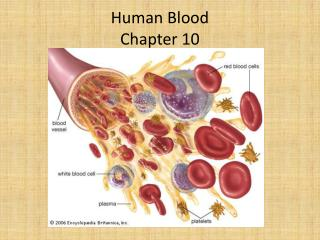 Human Blood Chapter 10
