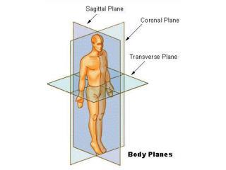 body regions intro