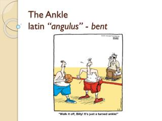 "The Ankle latin "" angulus ""  -  bent"
