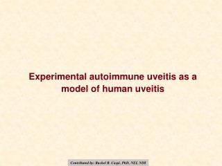 Experimental autoimmune uveitis as a model of human uveitis