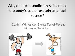 Why does metabolic stress increase the body's use of protein as a fuel source?