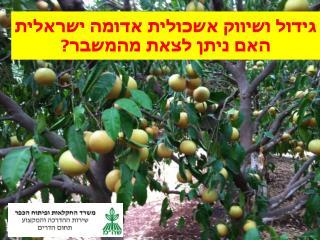 גידול ושיווק אשכולית אדומה ישראלית האם ניתן לצאת מהמשבר?