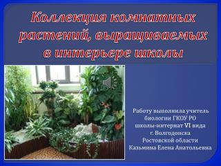 Коллекция комнатных растений, выращиваемых в интерьере школы