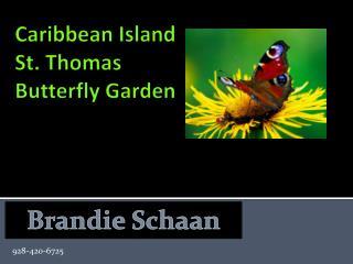 Caribbean Island  St. Thomas Butterfly Garden