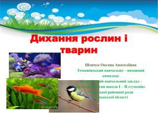 Дихання рослин і тварин