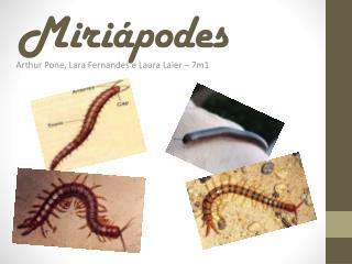 Miriápodes