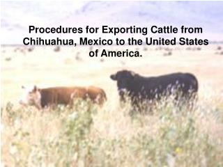 Procedures for Exporting Cattle from Chihuahua, Mexico to the United States of America.