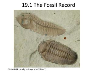 19.1 The Fossil Record