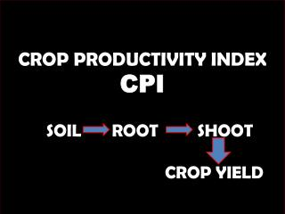 CROP PRODUCTIVITY INDEX CPI           SOIL       ROOT         SHOOT