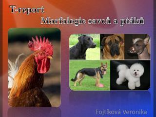 T-report Morfologie savc? a pt�k?