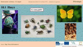 10.1  Hmyz