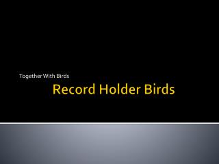 Record Holder Birds