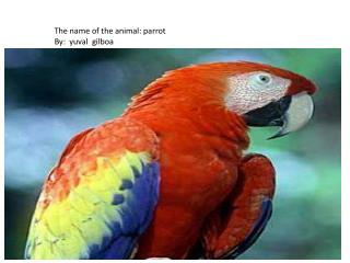 The name of the animal: parrot By:   yuval gilboa