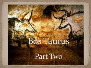Bos  Taurus Part Two