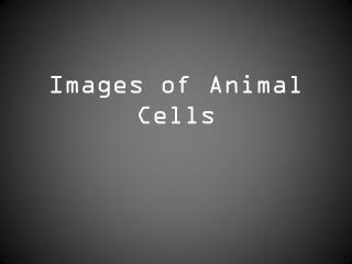 Images of Animal Cells