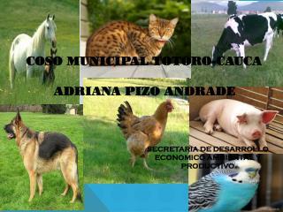 COSO MUNICIPAL  TOTORO-CAUCA ADRIANA PIZO ANDRADE