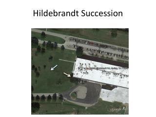 Hildebrandt Succession