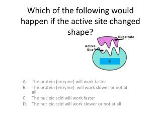 Which of the following would happen if the active site changed shape?