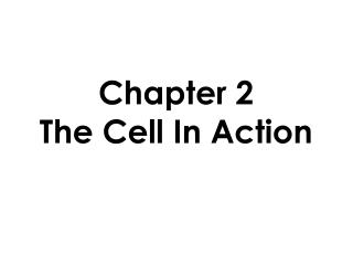 Chapter 2 The Cell In Action