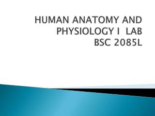 HUMAN ANATOMY AND PHYSIOLOGY I  LAB BSC  2085L