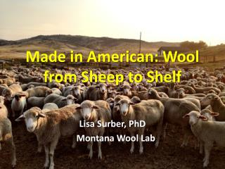 Made in American: Wool from Sheep  to Shelf