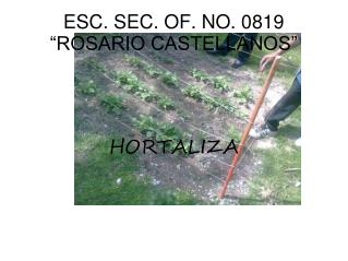 "ESC. SEC. OF. NO. 0819 ""ROSARIO CASTELLANOS"""
