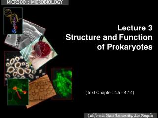 Lecture 3 Structure and Function  of Prokaryotes