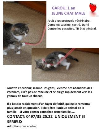 GAROU, 1 an JEUNE CHAT MALE 1 AN