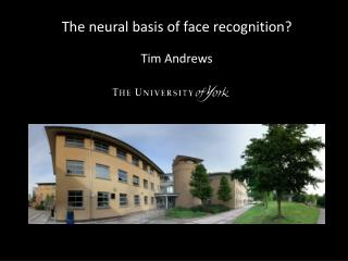The neural basis of face recognition?  Tim Andrews