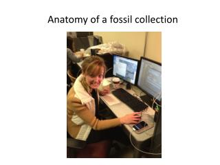 Anatomy of a fossil collection