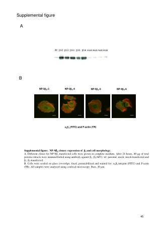  v  3  (FITC) and F-actin (TR)