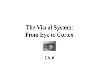The Visual System: From Eye to Cortex