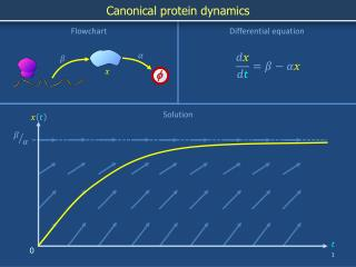 Canonical protein dynamics