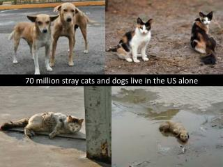 70 million stray cats and dogs live in the US alone