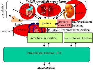 intravaskul�rn�