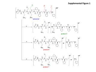 Supplemental Figure 1