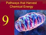 Pathways that Harvest Chemical Energy