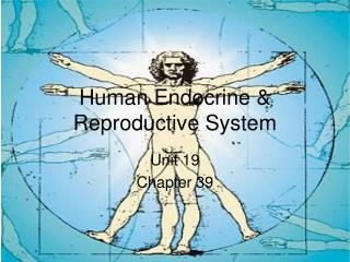 Human Endocrine  Reproductive System