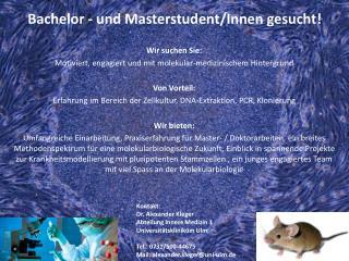 Bachelor  -  und  Masterstudent/Innen gesucht !