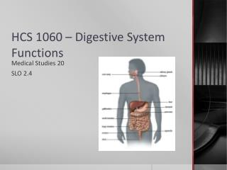 HCS 1060 – Digestive System Functions