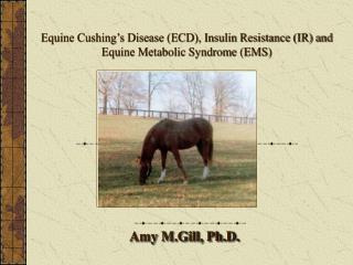 Equine Cushing s Disease ECD, Insulin Resistance IR and Equine Metabolic Syndrome EMS