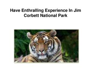 Have enthralling experience in Jim Corbett National Park