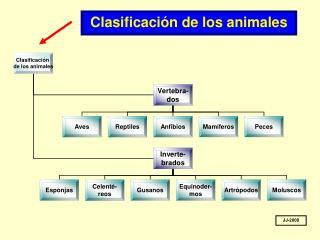 Clasificaci n de los animales